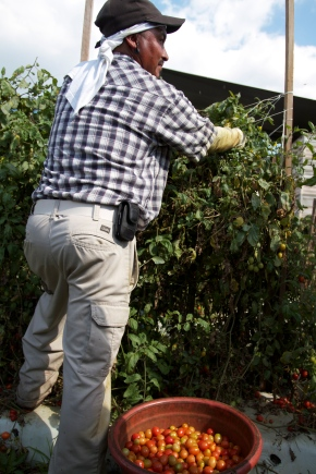 Immigration Reform Could Be Bad for Farmworkers